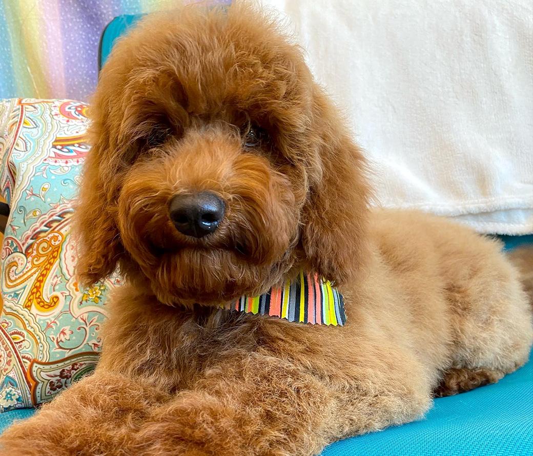 Best Dog Groomer Bellingham