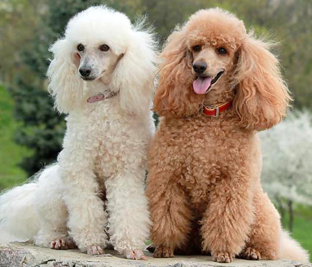 Best dog grooming - Bellingham