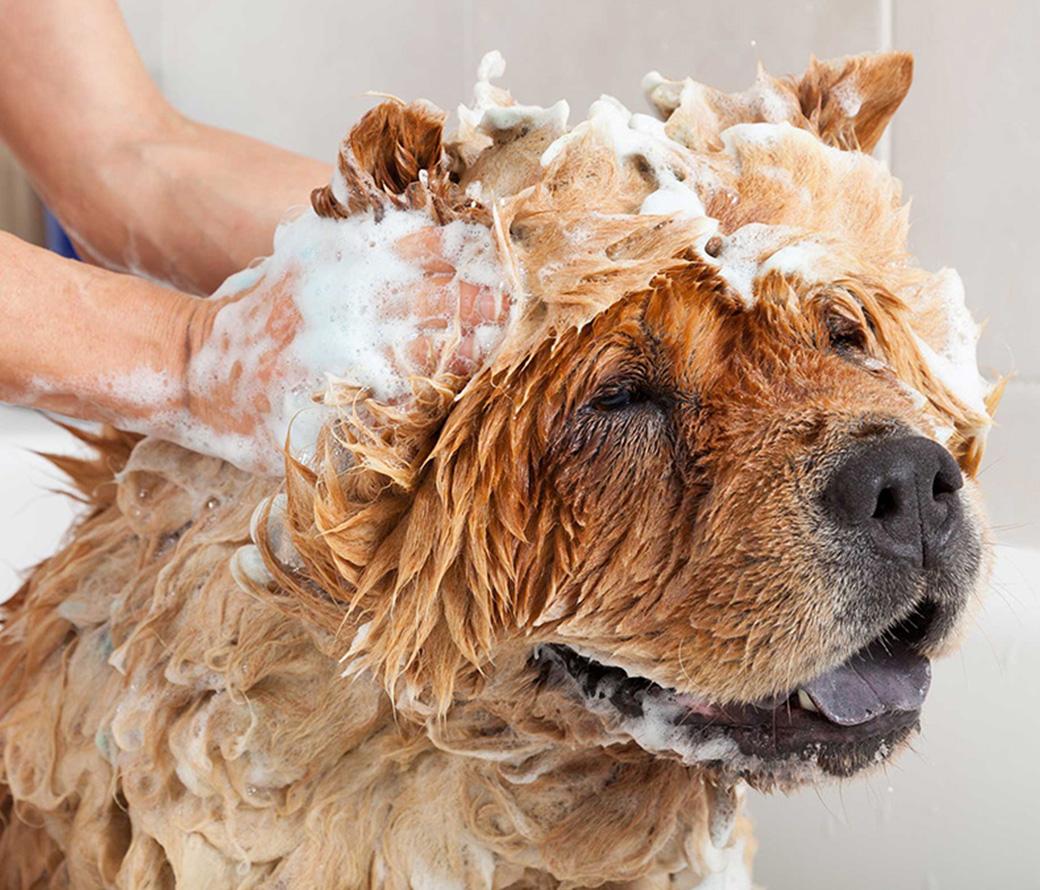 Dog grooming in Bellingham, Whatcom County